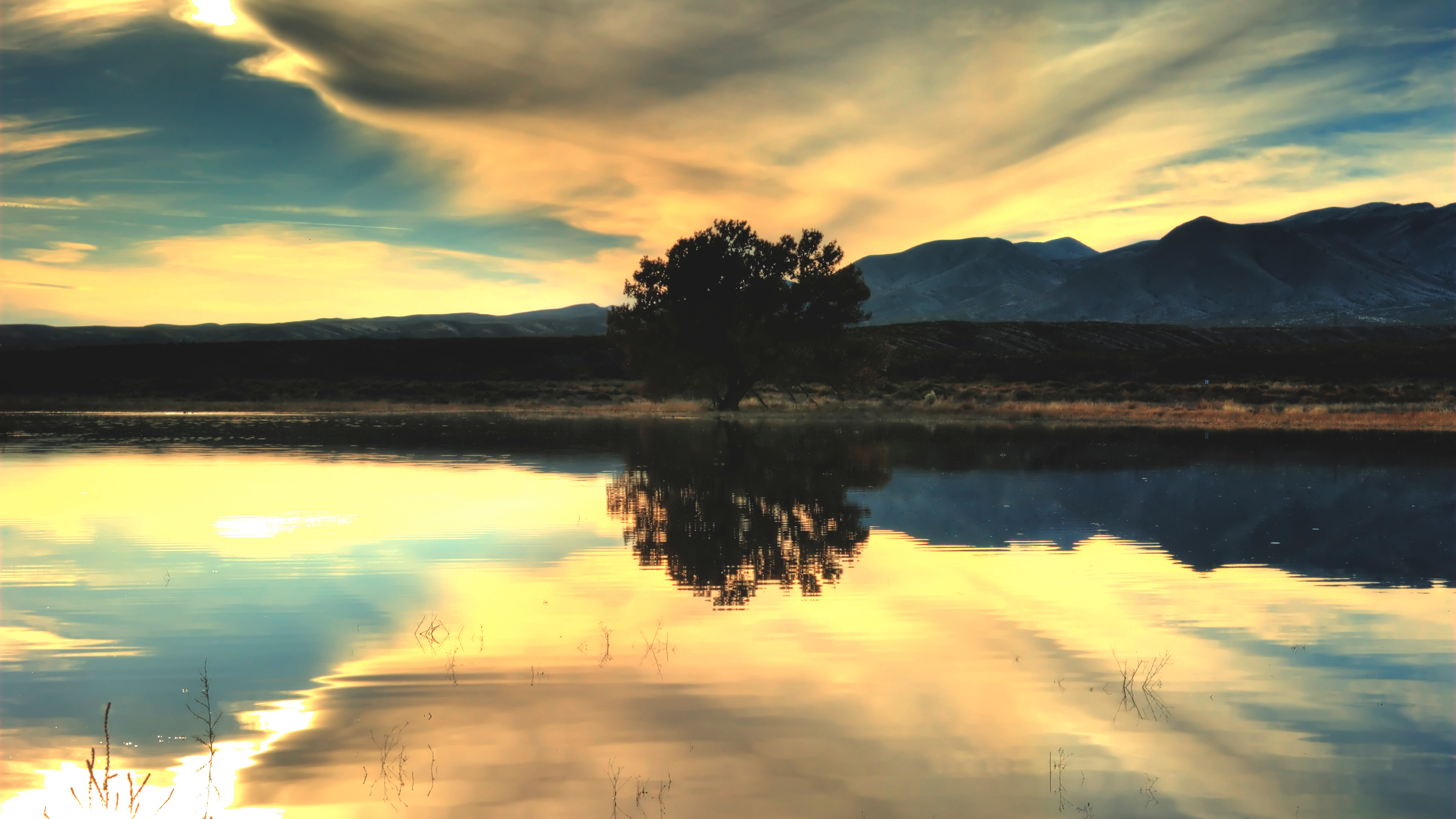 Tree water reflection at sunset