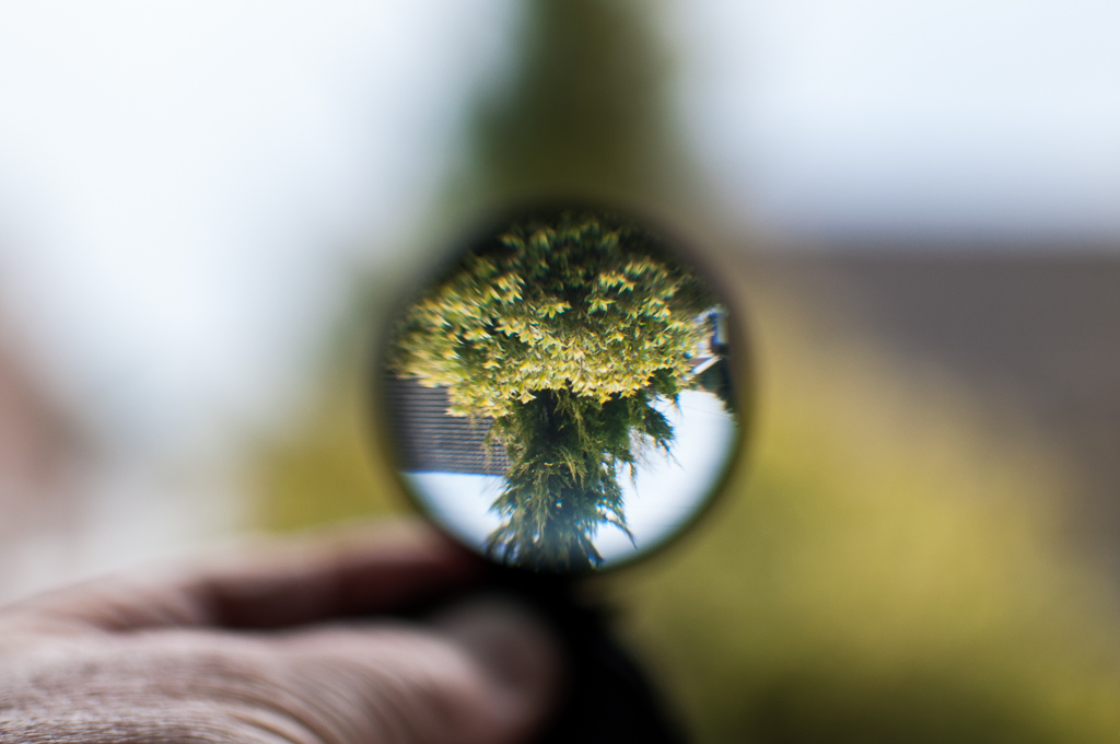 Magnifying glass looking at tree
