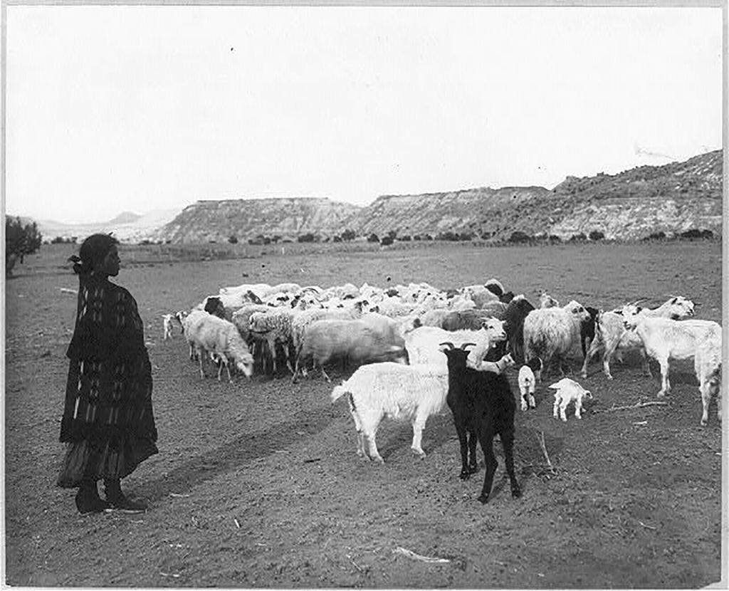 Native American woman watching over her flock of sheep and goats