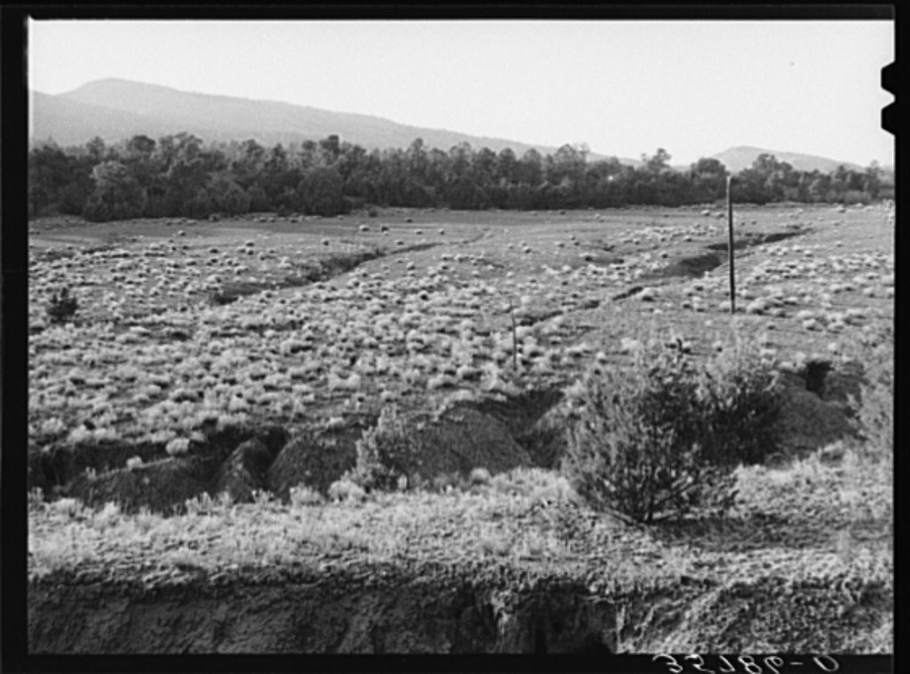 Gullies in a pasture in the mountains of Bernalillo County