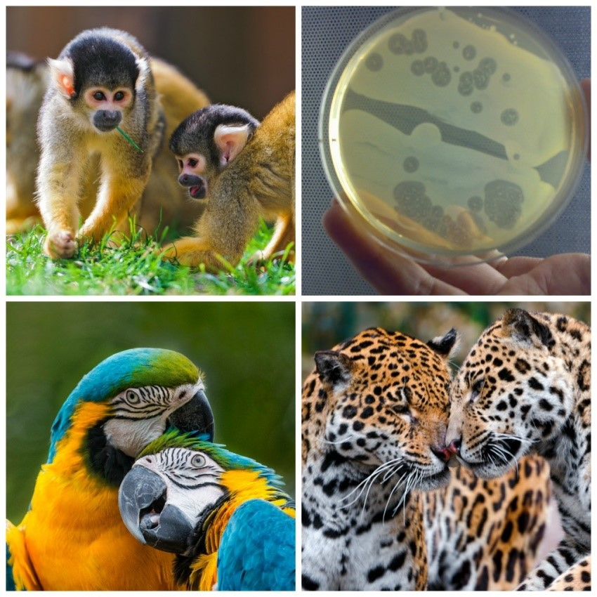 Monkyes, slime molds, parrots, and cheetahs